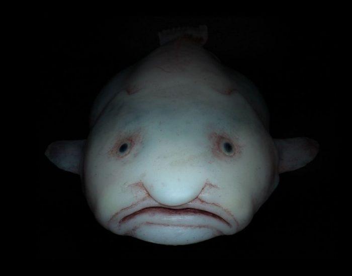 Рыба-капля в воде
