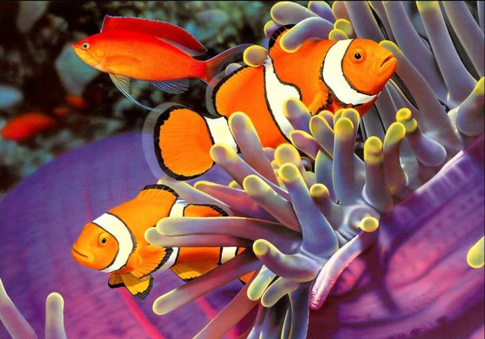 Рыбы-клоуны у кораллов