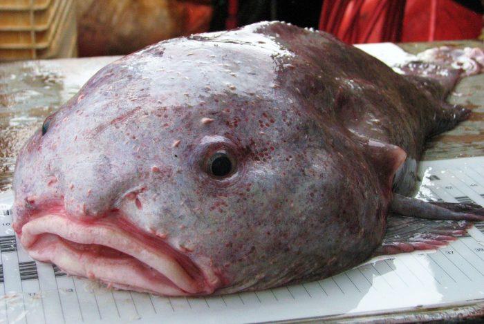 Выловленная рыба-капля