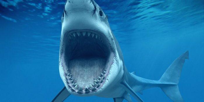 Челюсти белой акулы