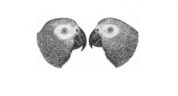 Половые различия попугаев жако