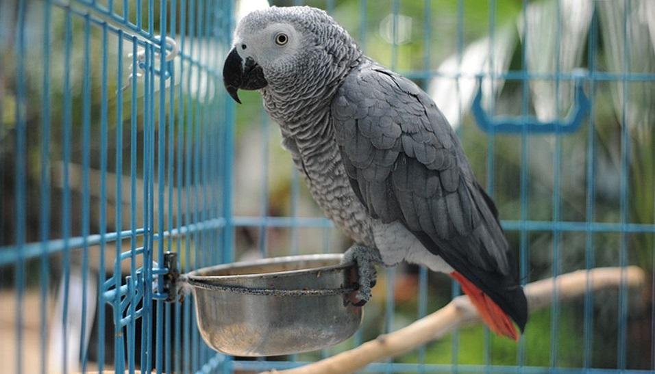 Обустраиваем домик для своей птицы. Какие бывает аксессуары для клеток