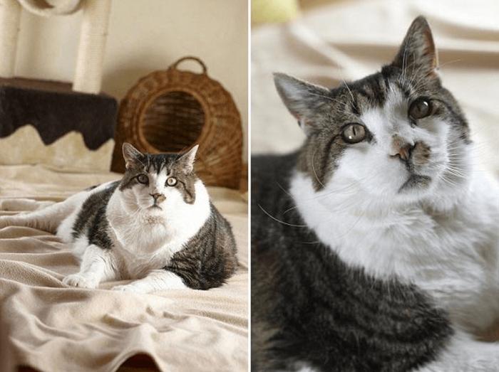 Кот элвис лежит на кровати