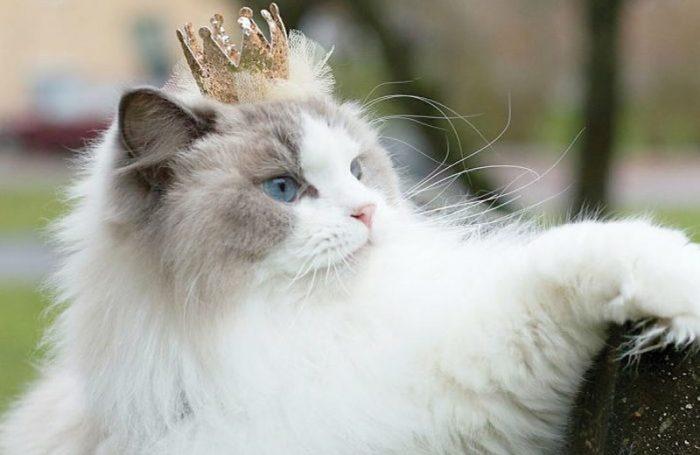 Аврора с короной