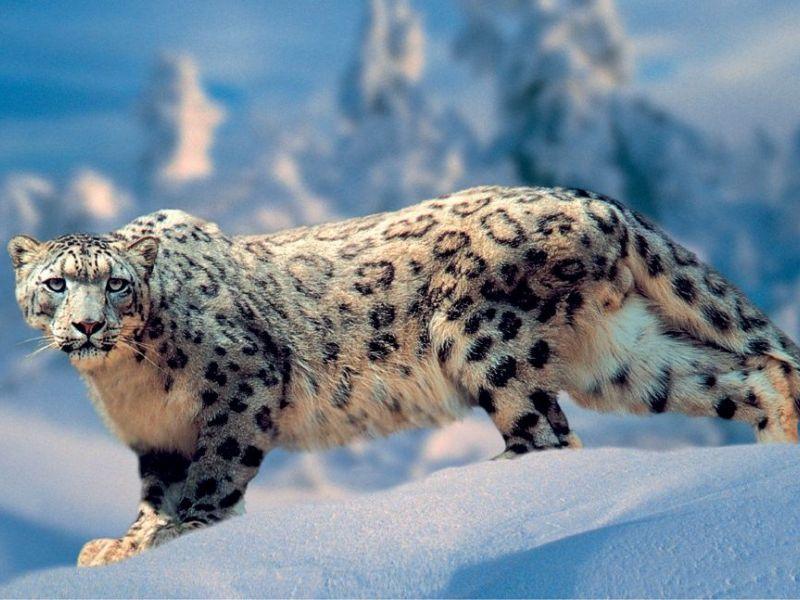 Топ-10 самых редких животных в мире