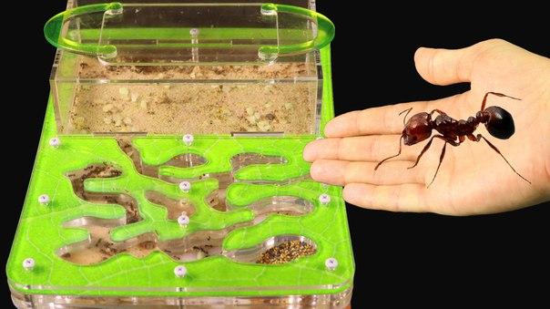Заселение муравьев