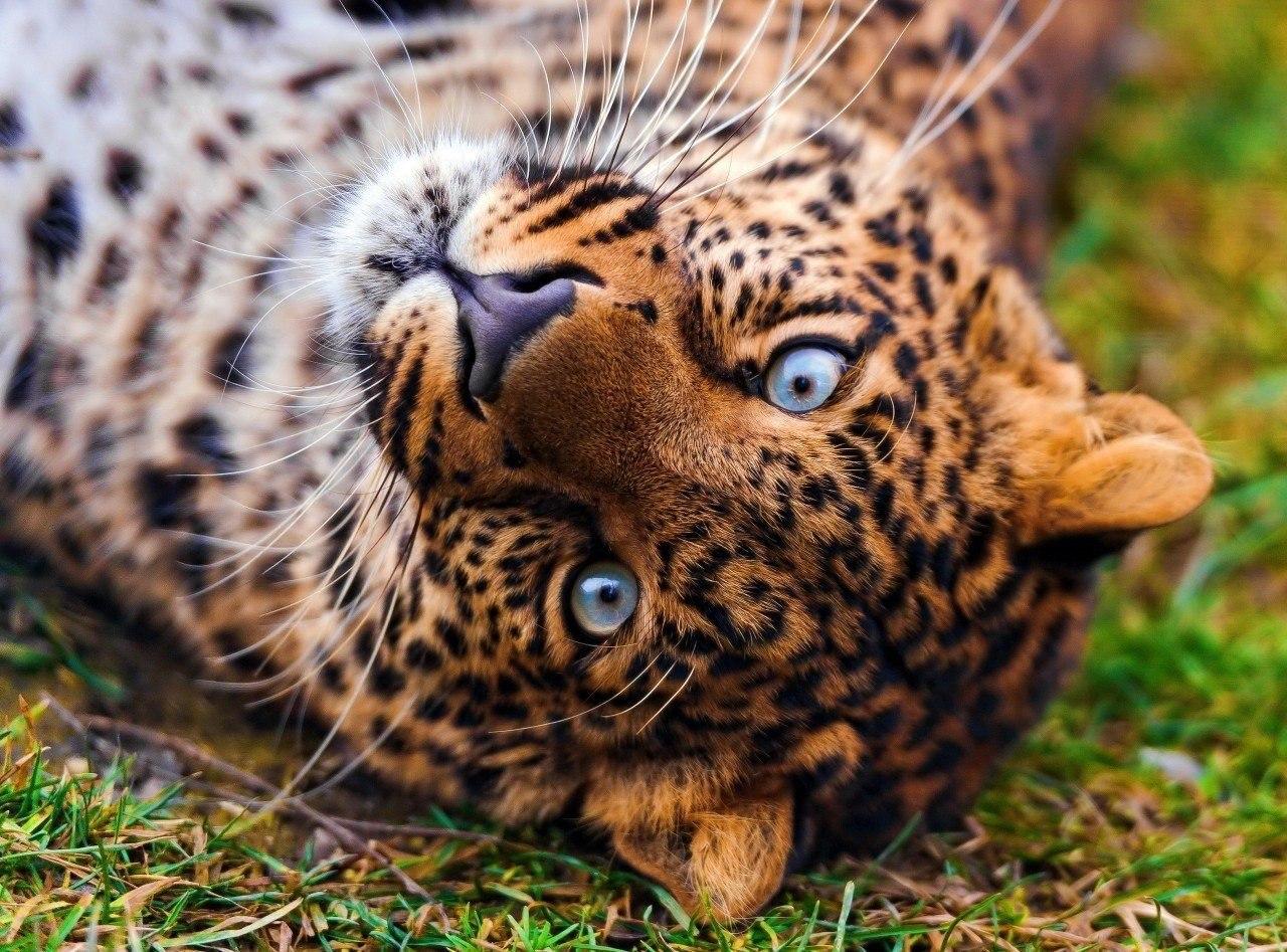 Новый метод кормления животных опробован в зоопарке Калининграда