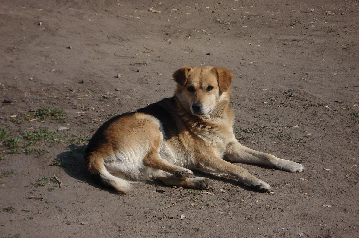 Счастливое спасение двух собак из колодцев в Саратове