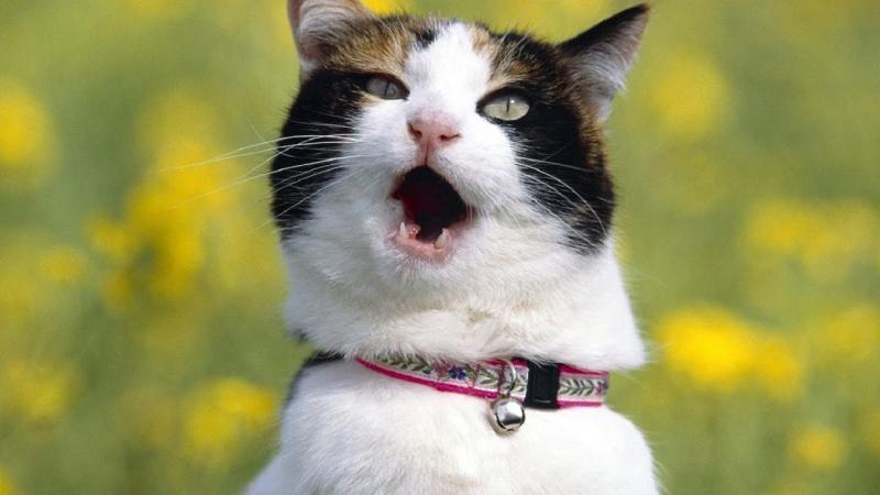 Говорящая кошка