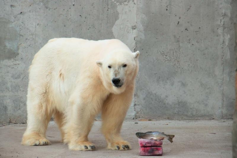 В зоопарке Санкт-Петербурга зверям подают ледяные торты