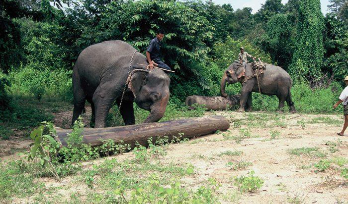Слоны помогают людям