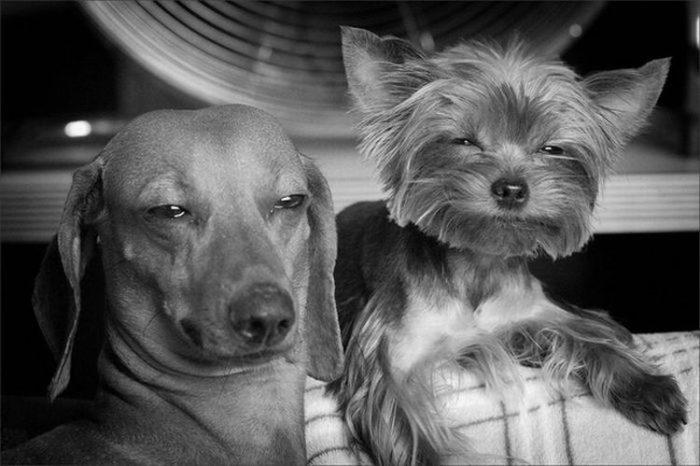 Сразу две собаки-подозреваки