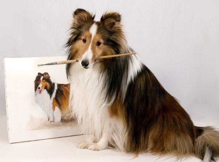 Собака Шелти с акварельной кистью в зубах