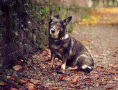 Собака дворняжка
