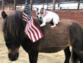Собака едет на пони