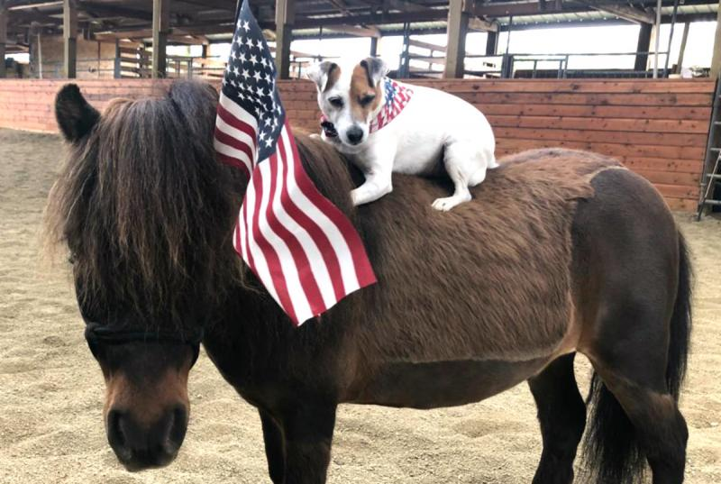 Удивительная дружба коня и собаки