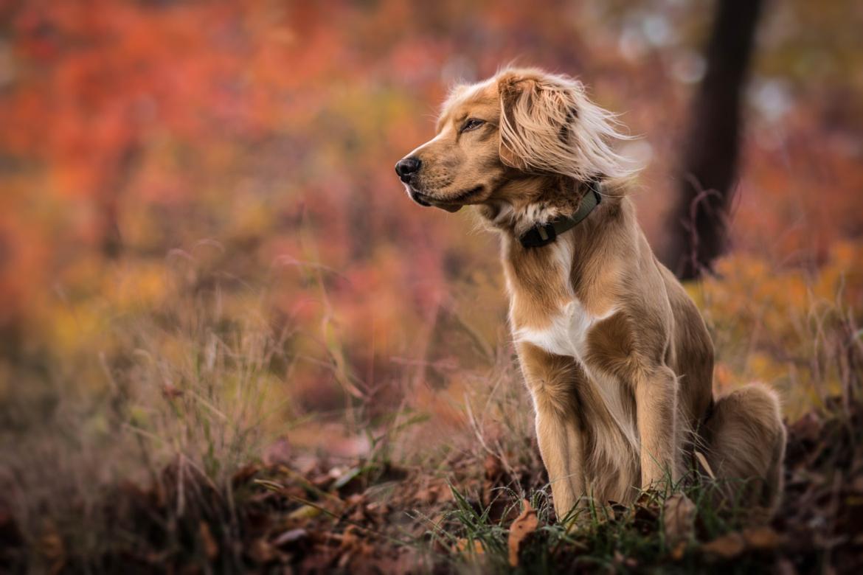 Учёные выяснили, что собаки переживают за людей, когда им морально плохо