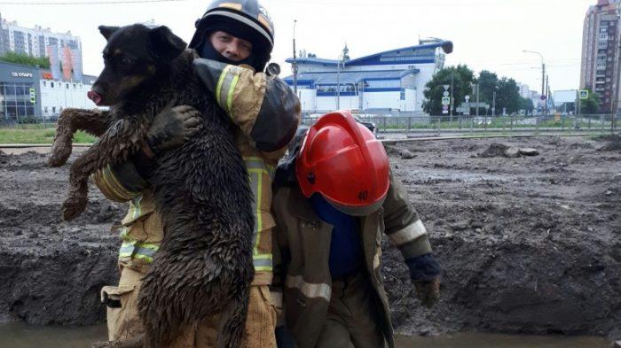 Сотрудники МЧС спасли собаку, застрявшую в песке