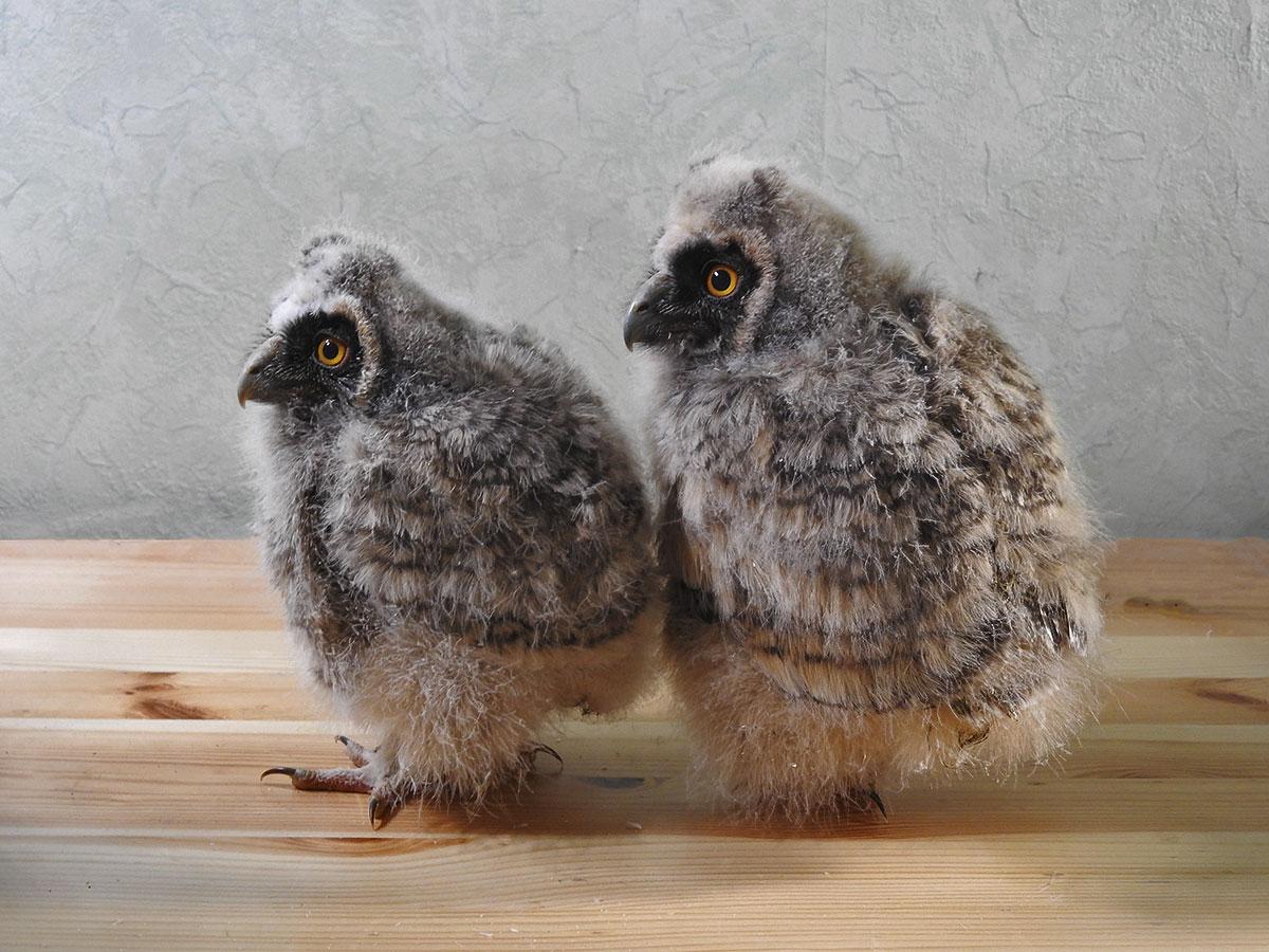 В зоопарке Санкт-Петербурга родились восемь совят