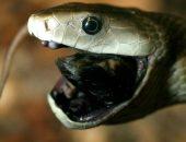 ТОП-10 самых страшных животных в мире