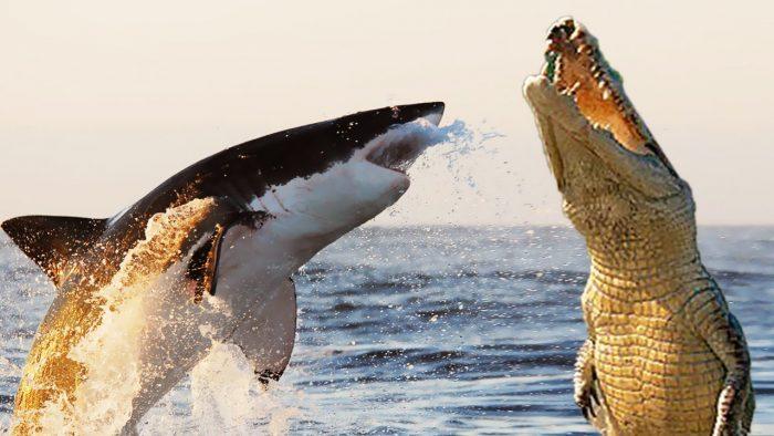 Акула и крокодил
