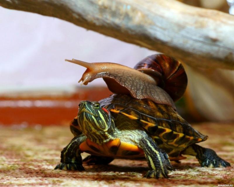 Сказка в духе Братца Кролика: кто быстрее — черепаха или улитка?