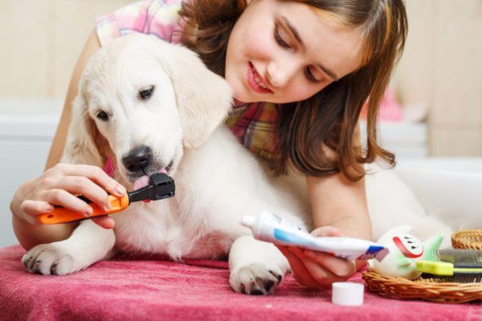 Девочка чистит собаке зубы