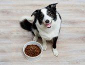 Когда правильно кормить собаку