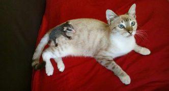Кошка и опоссум почти все время проводят вместе