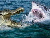 Кто сильнее: акула или крокодил