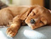 Один отдыхает после прогулки