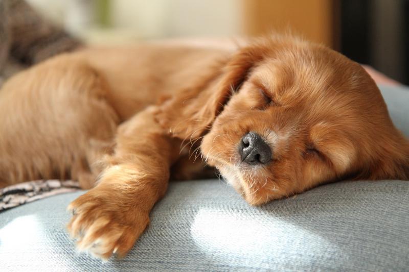 Люди спасли щенка, которого в приюте хотели усыпить, посчитав слишком нервным