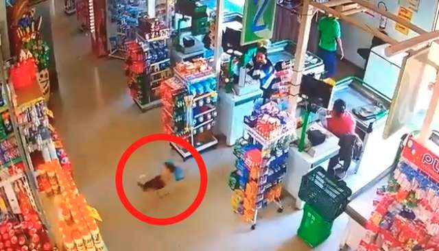 Пёс бежит к выходу с хлебом в зубах
