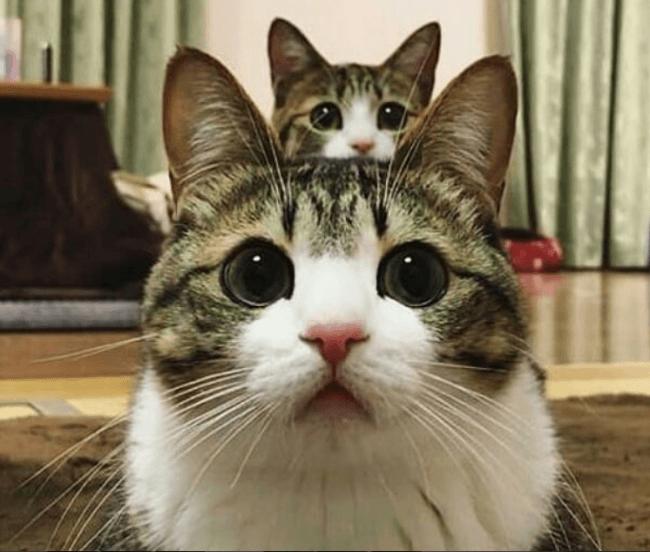 Кошки-