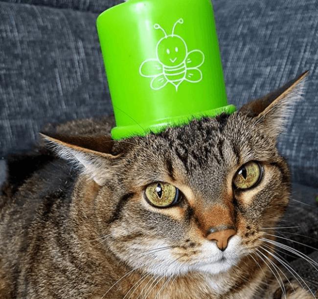 Необычный головной убор на голове кота