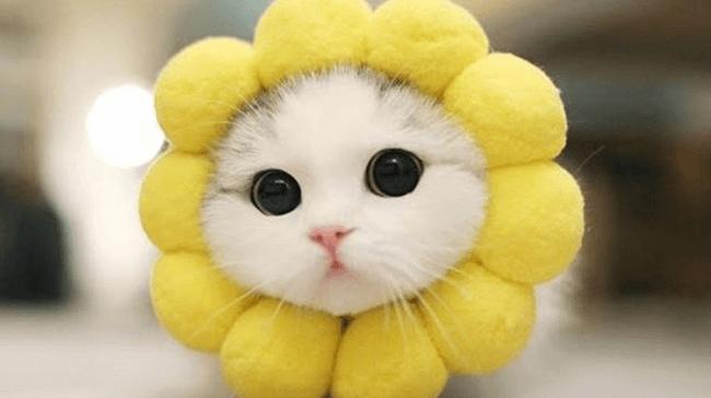 Кошка-подсолнух