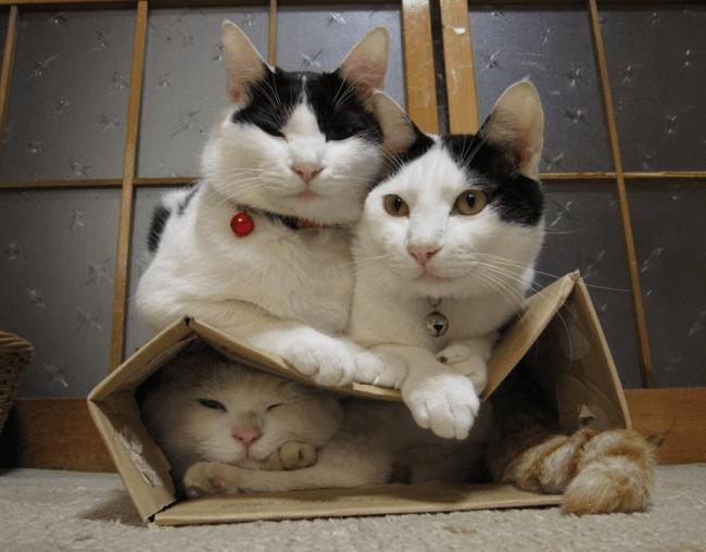 Кот почувствовал себя матрацем