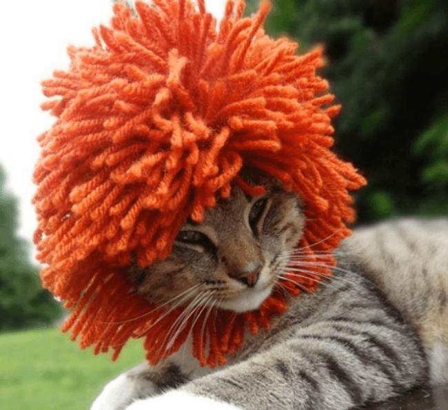 Кот с прической панка