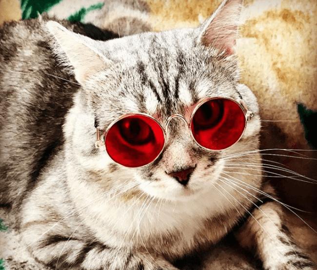 Кошка в красных очках