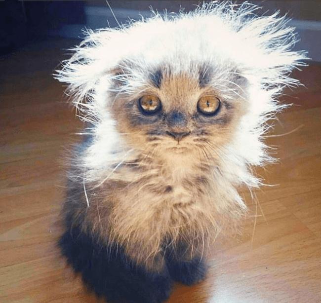 Суперлохматый котенок