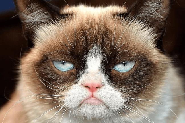 Крестный котоотец