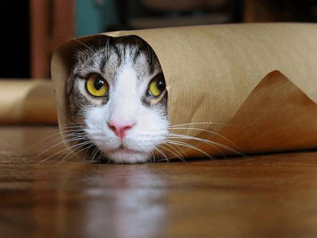 Рулон с кошкой