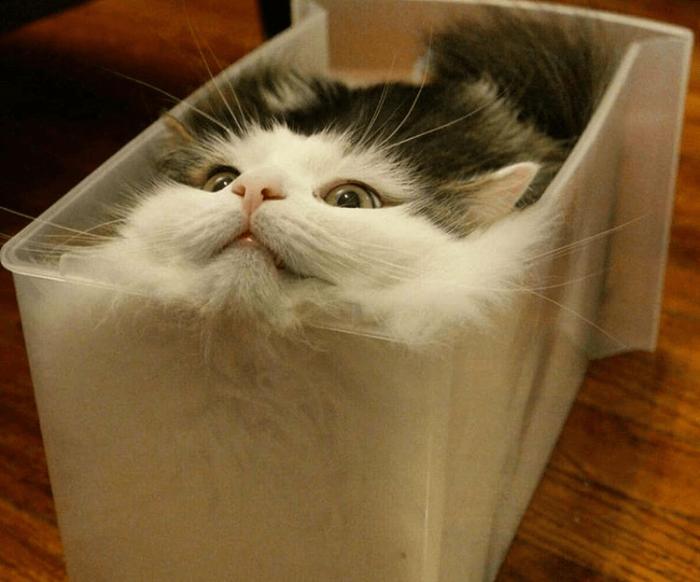 Кошка с трудом поместилась в форму
