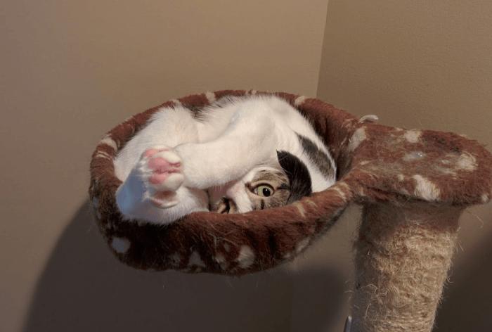 Чудо-позы кошки в «гнезде» когтеточки