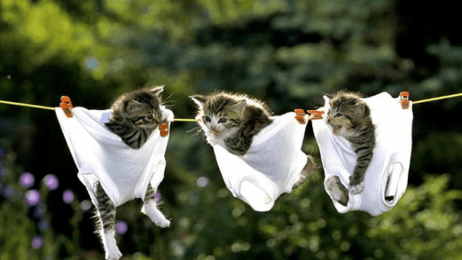 Котята в белье