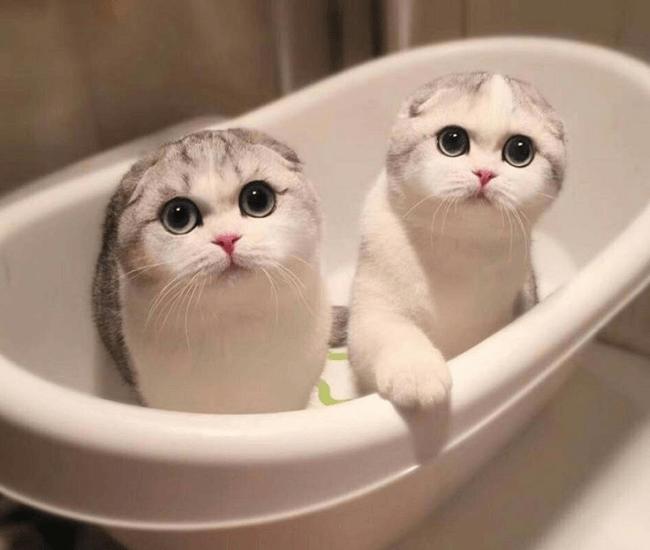 Кошки в ванне
