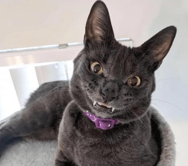 Зверская кошачья улыбка