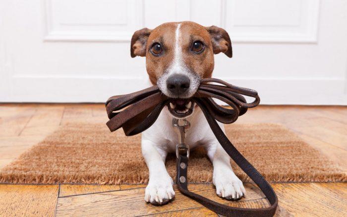 Прогулка и кормление собаки
