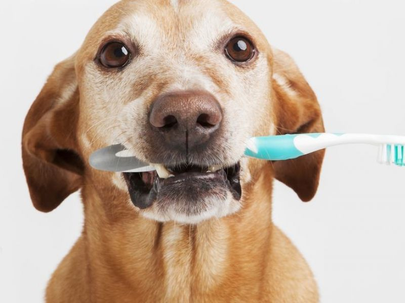Как чистить зубы собаке в домашних условиях