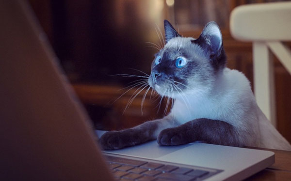 Кошка сидит за ноутбуком